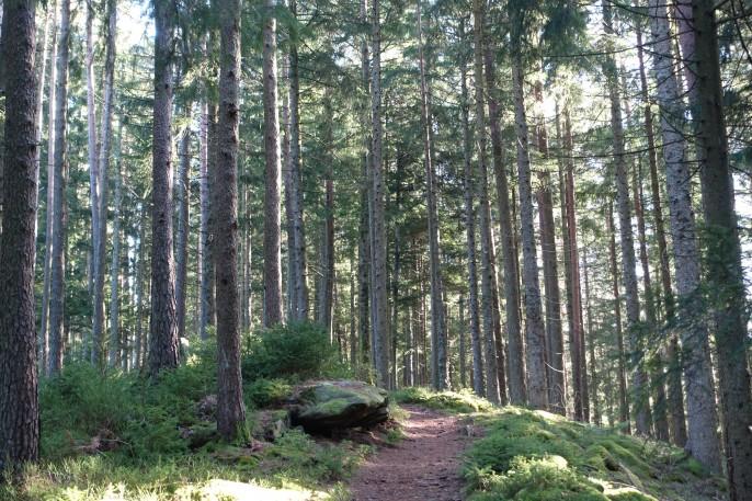 Der Wald - deutscher Sehnsuchtsort. Wohin führt der Weg der Migration und Integration?