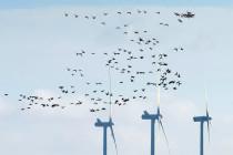 Windräder – Gigantische Vogelkiller verändern das Ökosystem