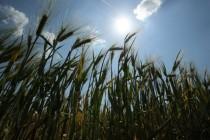 Weltweiter Kampf gegen Glyphosat