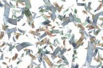Millionen für Tageszeitungen und Anzeigenblätter aus dem Bundeshaushalt