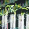 Gentechnik in der EU:  Der Aufschrei der Wissenschaftler
