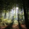 Windräder dürfen jetzt auch den Odenwald zerstören