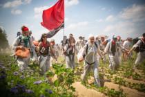 Klimaaktivisten zerstören Äcker