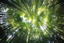 """Der """"Klimakiller"""" macht die Erde grüner"""