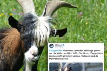 ZDF bestätigt: Starkes Geschlecht trotz aller Probleme nützlich