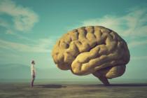 Psychologe Heiner Rindermann: Intelligentere Gesellschaften sind reichere Gesellschaften