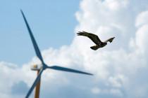 Verwaltungsgericht und vogeltötende Windräder:»Ein Nullrisiko ist nicht zu fordern«