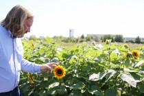 Das Coronavirus als Frontalangriff auf die grüne Naturverklärung