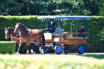 """Die """"Süddeutsche"""" erzählt die Geschichte vom Pferd"""