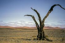 Kernreaktoren überall – und Deutschland will Holz aus Namibia verfeuern
