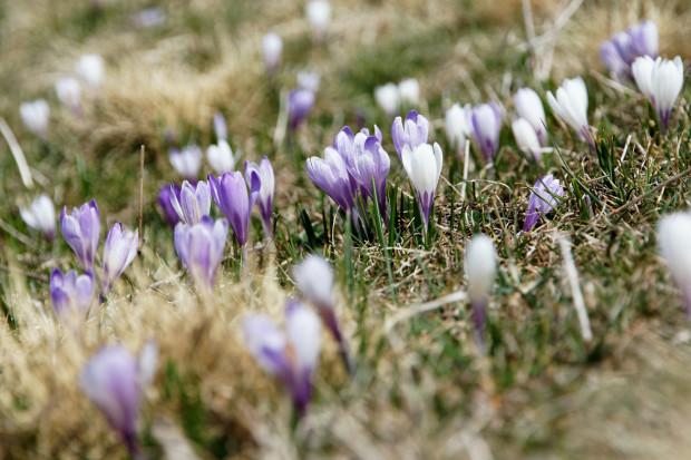 Ein bißchen Frühling für die Freiheit
