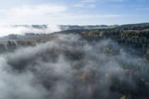 Wirrungen der Energiewende: die Zerstörung des Schwarzwaldes durch Grün-Schwarz